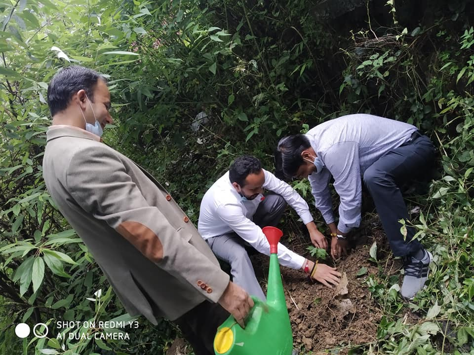 Plantation in UCBS Avalodge Shimla