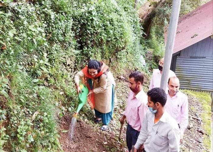 Sapling a Plant initiative at UCBS